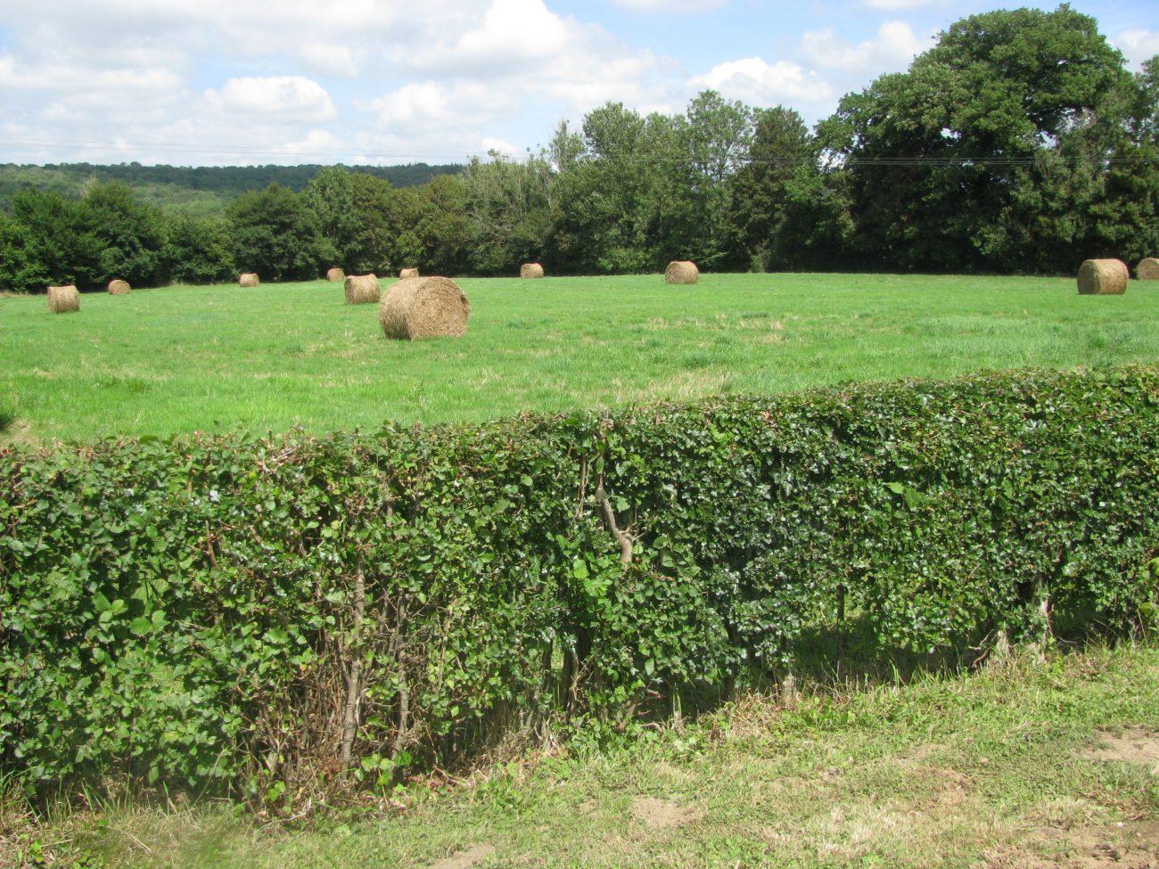 Haies Les Agriculteurs Participent A Leur Entretien Terres Et