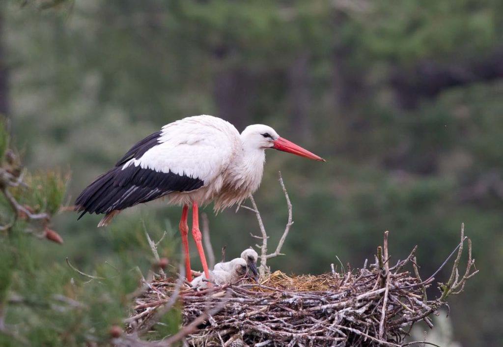 Parc, marquenterre, oiseaux, ornithologie, nature
