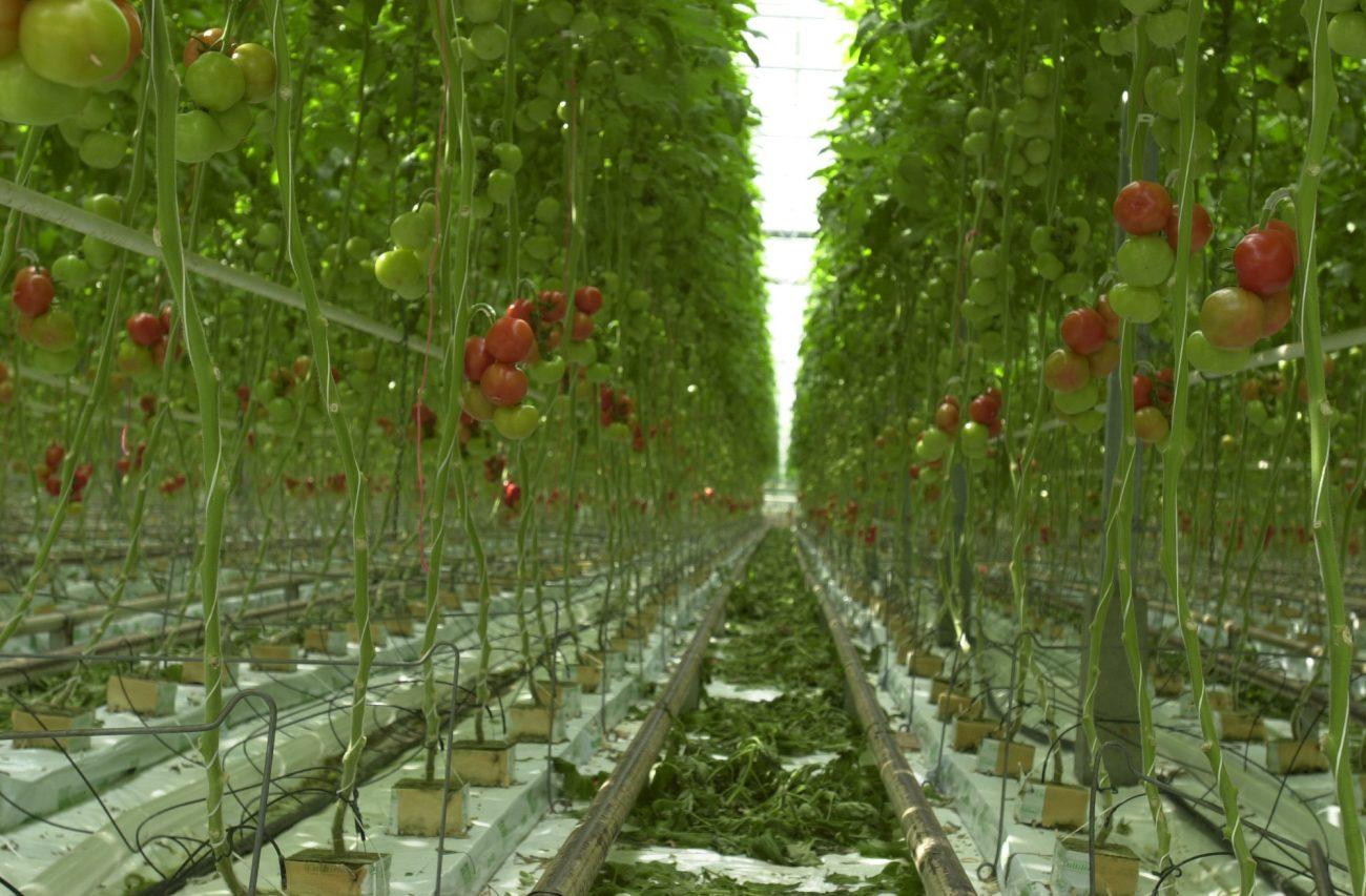 Légumes, biostimulants, réglementation
