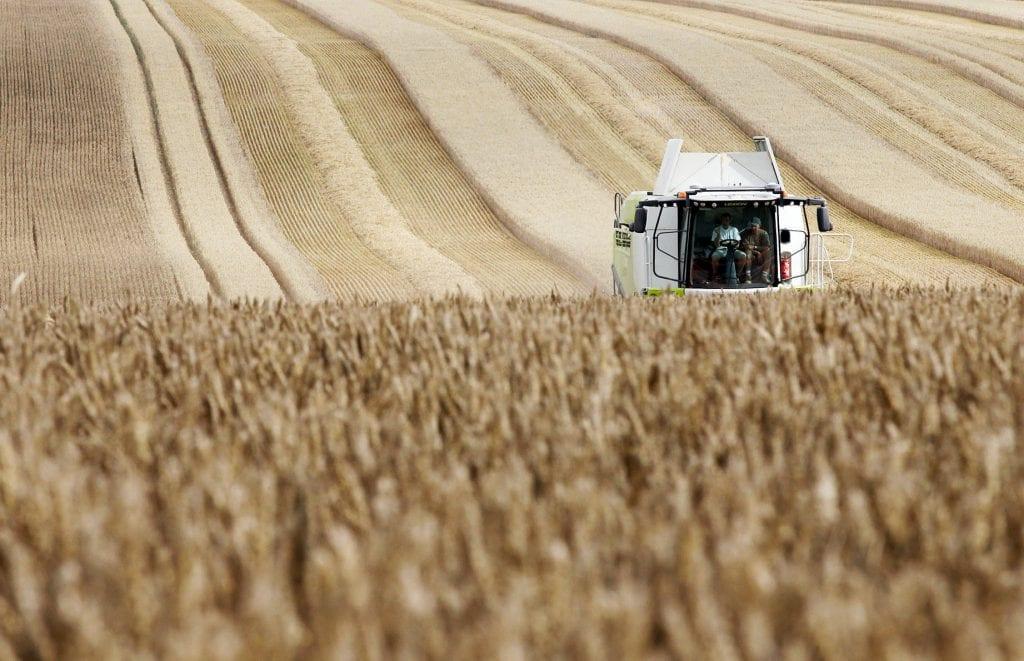 Moisson, blés, Nord-Pas de Calais, agriculture