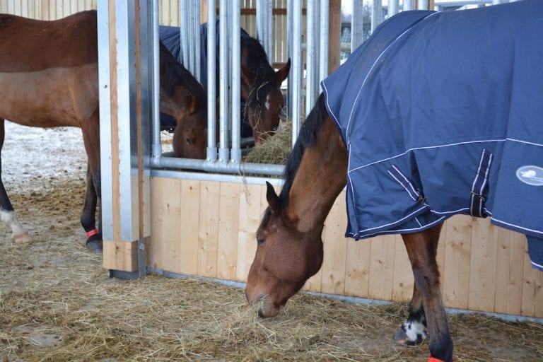 Une vingtaine de chevaux profitent de ces nouveaux espaces.