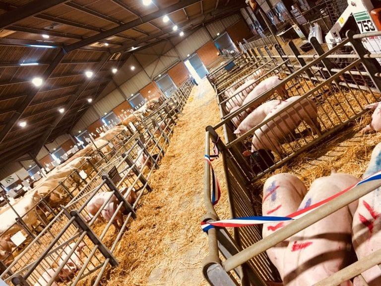 © Association du Porc des Hauts Pays