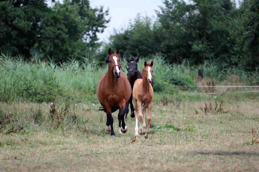 cheval terres et territoires