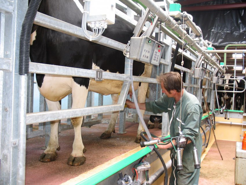 traite lait terres et territoires