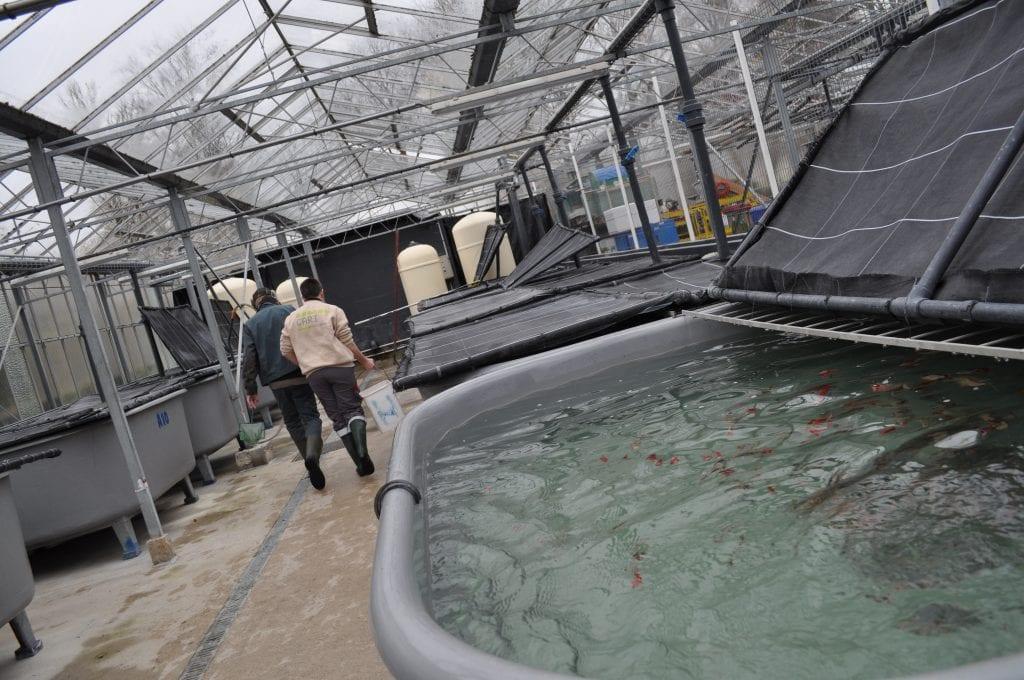 Pure Salmon installera courant 2020 sa ferme d'élevage de saumons à terre et en milieu fermé © DR