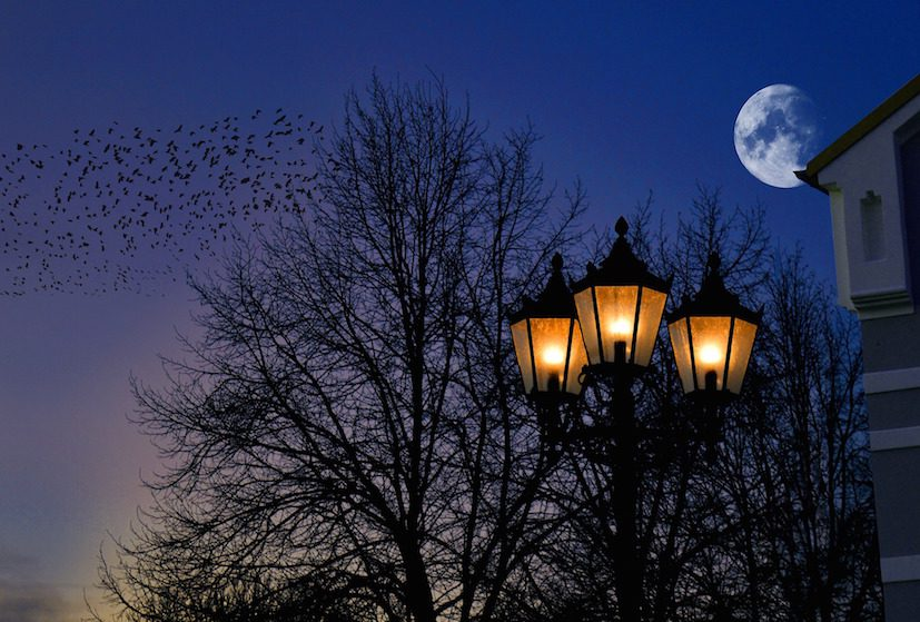 pollution lumineuse © Frauke Riether de Pixabay