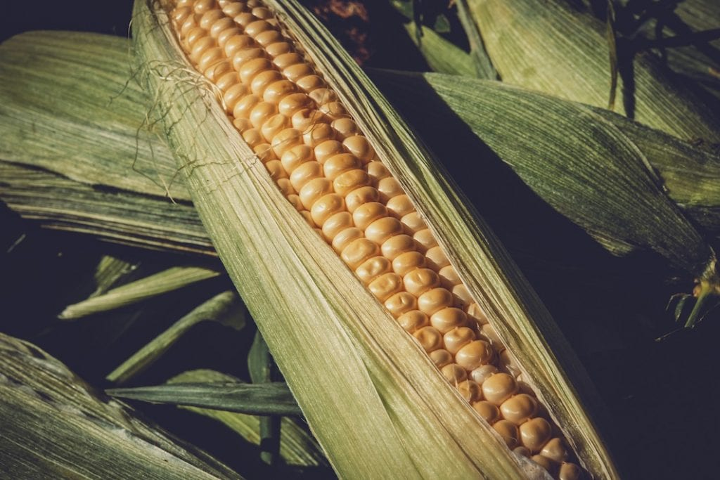 maïs amidon © Couleur - Pixabay