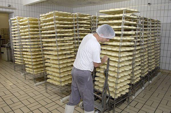 Terres et Territoires - fabrication de camemberts au lait cru AOC