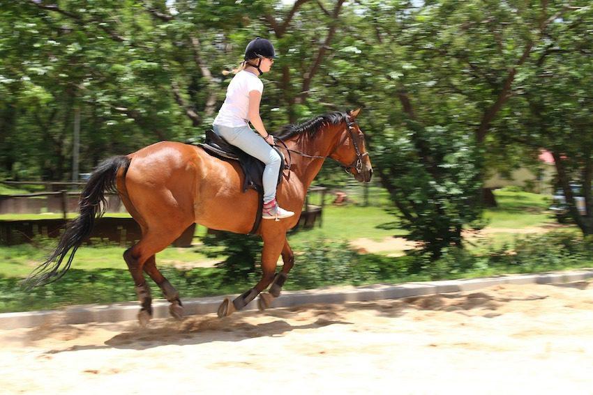 cheval Tim de Marie de Pixabay