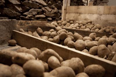 Terres et Territoires - stocks pomme de terre