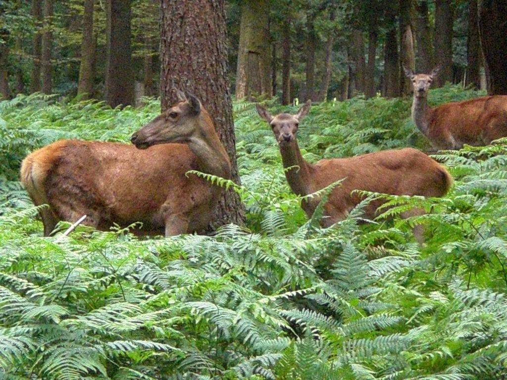 Une pétition en ligne a été lancée début juin contre l'option cynégétique et faune sauvage, proposéepar deux établissements en France dont l'Institut Saint-Éloi de Bapaume. Une contre-pétition a été rédigéepar le président de la Fédération des chasseurs du Pas-de-Calais. Récit des faits.